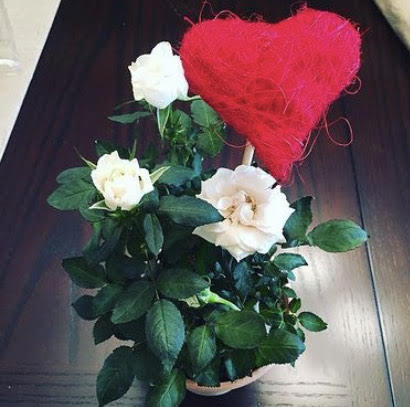 Photo of a flower pot with three white roses and a fuzzy red heart.